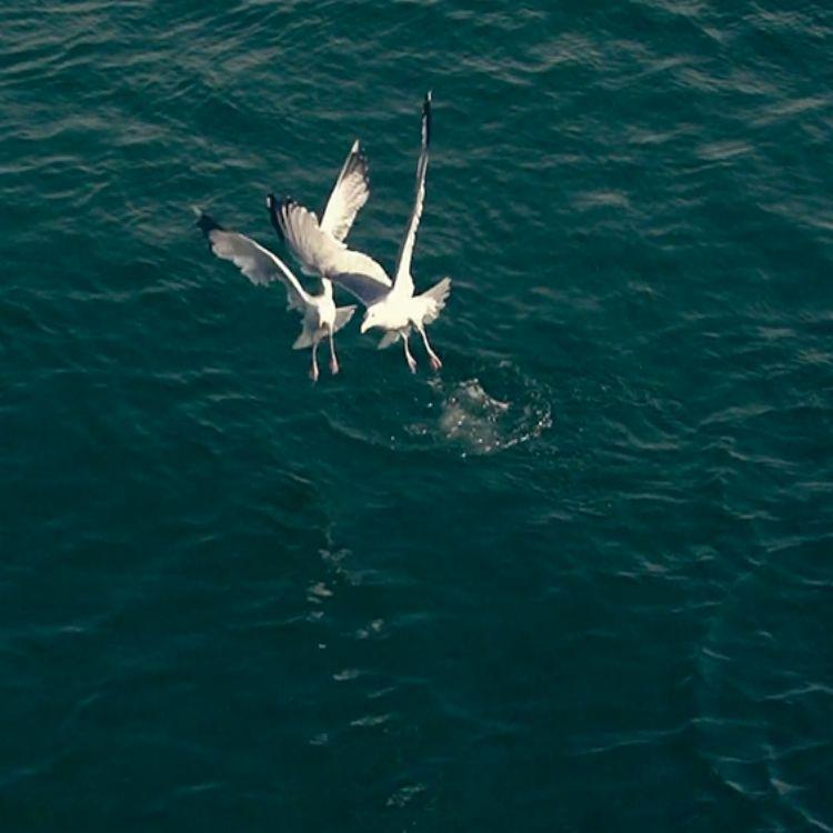 無人機航拍攝影